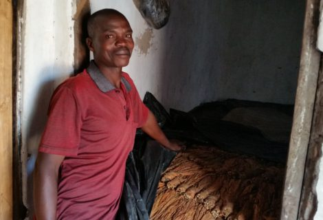 Sustainable tobacco farming can help meet development goals